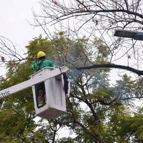 Empieza la poda invernal: cómo pedir que intervengan un árbol